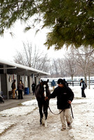 2014 Fasig-Tipton Winter Mixed Sale
