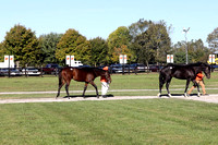 FTK October Fall Yearling Sale Gallery