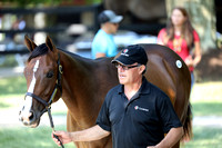 2019 Fasig-Tipton July, HORA Sale